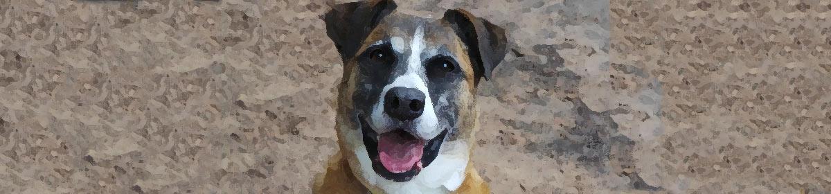 Szkolenie i tresura psów – pumilo